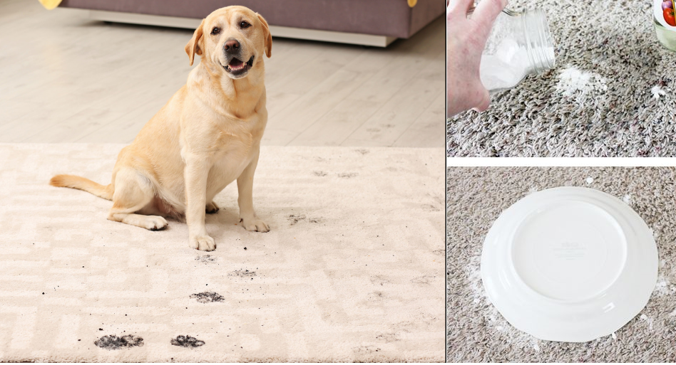 Does Vinegar And Baking Soda Remove Pet Urine From Carpet Pet Urine Pet Carpet Cleaners Cleaning Pet Urine