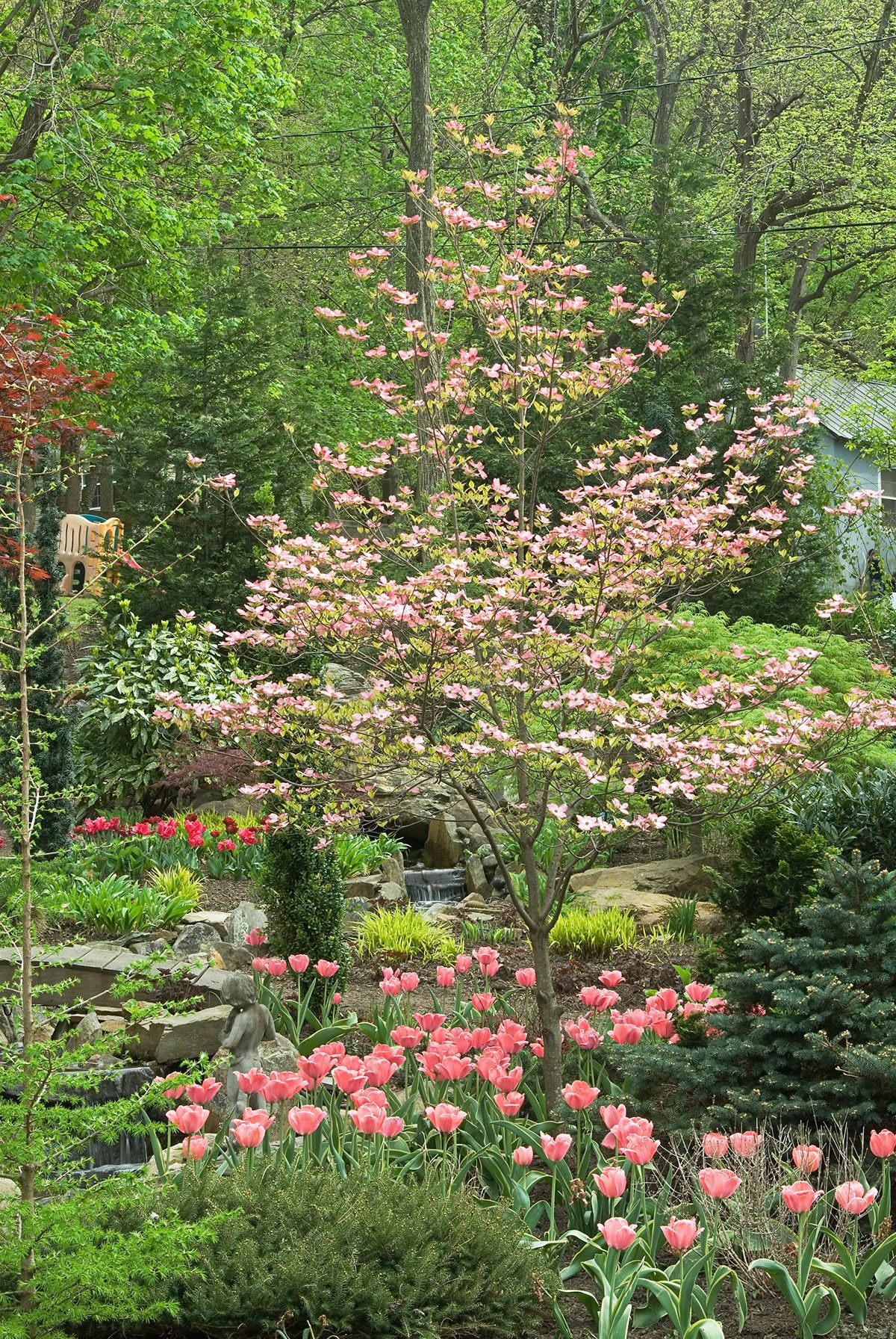 Our Favorite Small Trees Landscaping shrubs, Small trees