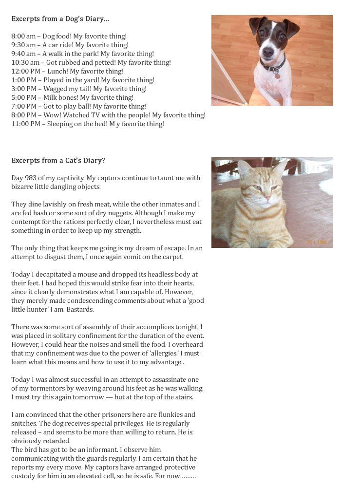 Excerpts From a Cat and Dog's Diary Cat diary, Cat vs