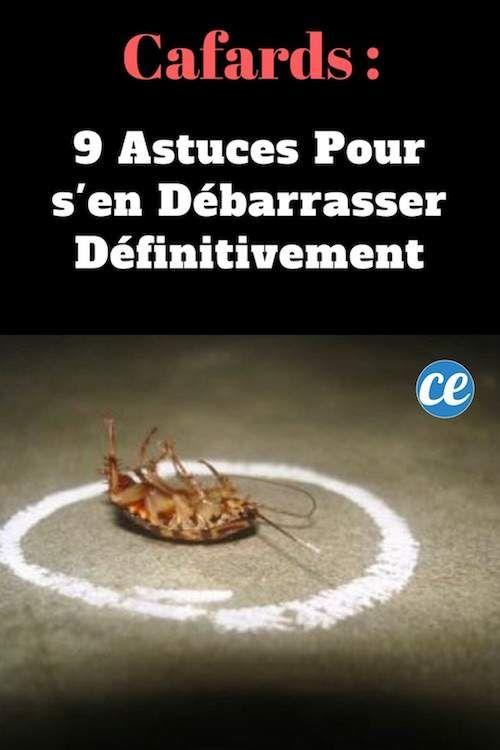 cafards 9 astuces pour s 39 en d barrasser d finitivement anti insectes et anti parasites. Black Bedroom Furniture Sets. Home Design Ideas