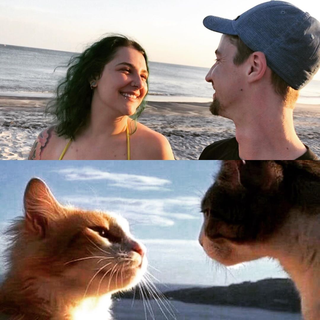 I Love Him So Much Cat Kitty Kitten Love Significantother Couples Meow Beach Funny Cute Photo Minet Et Minette Neverse Kitten Cats Kitty
