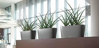 bildergebnis f r pflanzen b ro b ro begr nung pinterest b ros und pflanzen. Black Bedroom Furniture Sets. Home Design Ideas