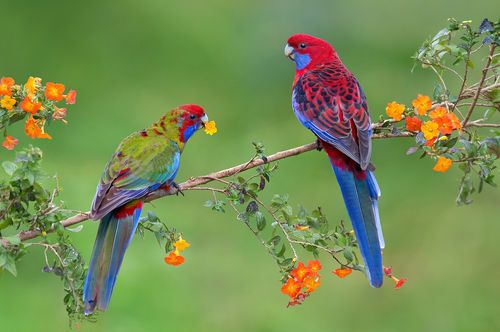 An image on imgfave | pájaros | Pinterest | Bird, Exotic birds and ...