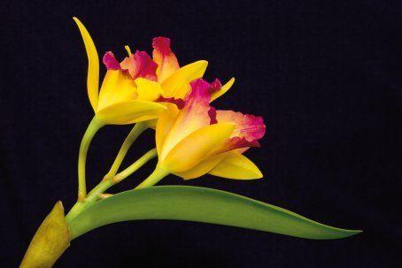exposition d orchid es dans les jardineries truffaut plantes orchid e fleurs et arbuste. Black Bedroom Furniture Sets. Home Design Ideas