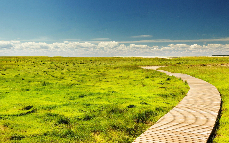 風景 パス 田舎 草 草原 地平線 トレイル 空 風景 田舎 景色