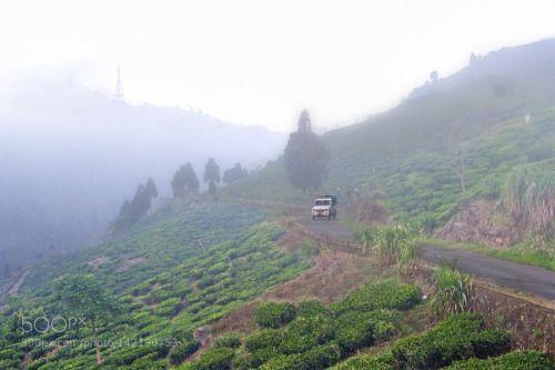 Misty Darjeeling Tea by Angshu  mist fog car green jeep estate expensive plantation slopes 18-270mm Kurseong Canon India 60D Himalay