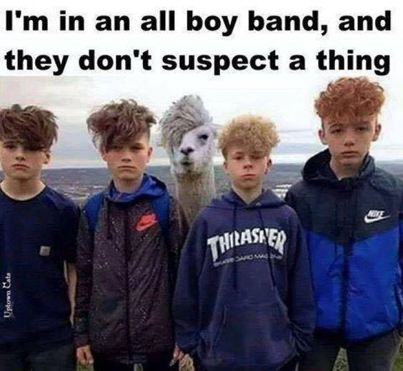 Funny Lama Memes Found on the Internet