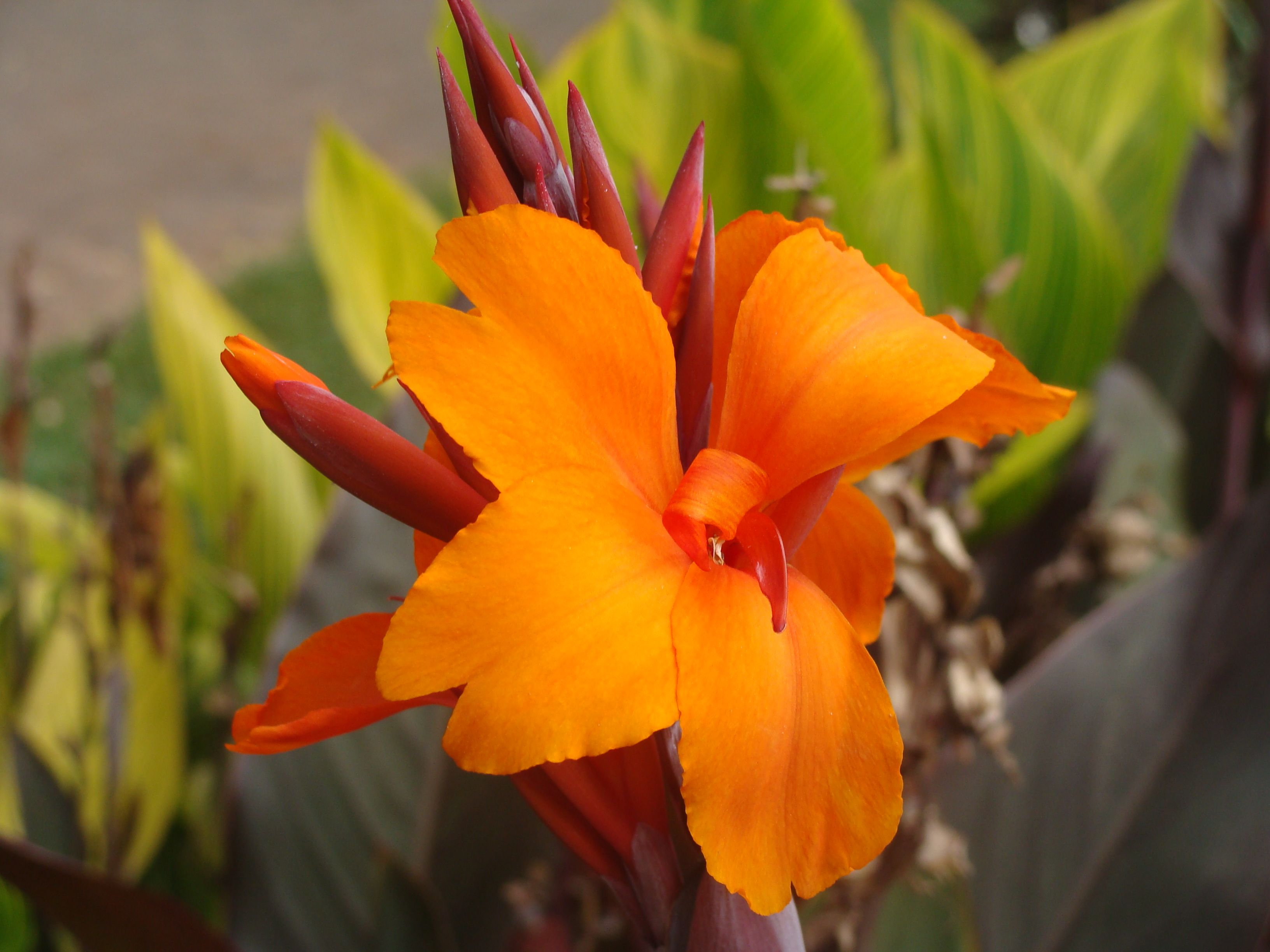 Beautiful Flowers In Kenya Foreign Travel Out Of Africa Kenya