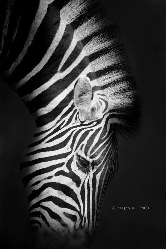 Untitled by Alejandro Prieto, via 500px