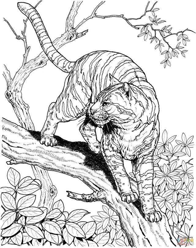 25 Creative Photo Of Jungle Coloring Pages Albanysinsanity Com Jungle Coloring Pages Animal Coloring Pages Detailed Coloring Pages