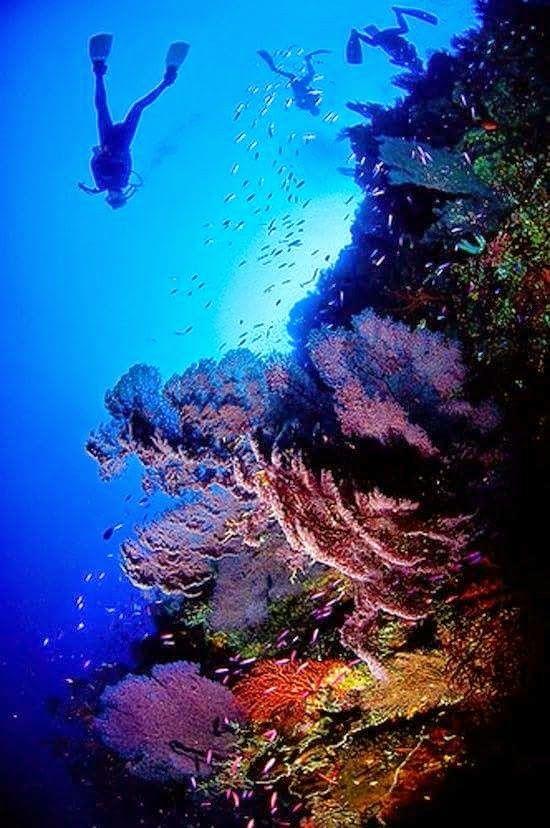 Underwater World, Diving, Scuba Diving
