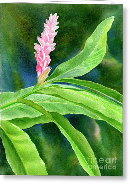 Pink Ginger With Blue Green Background Greeting Card by Sharon Freeman