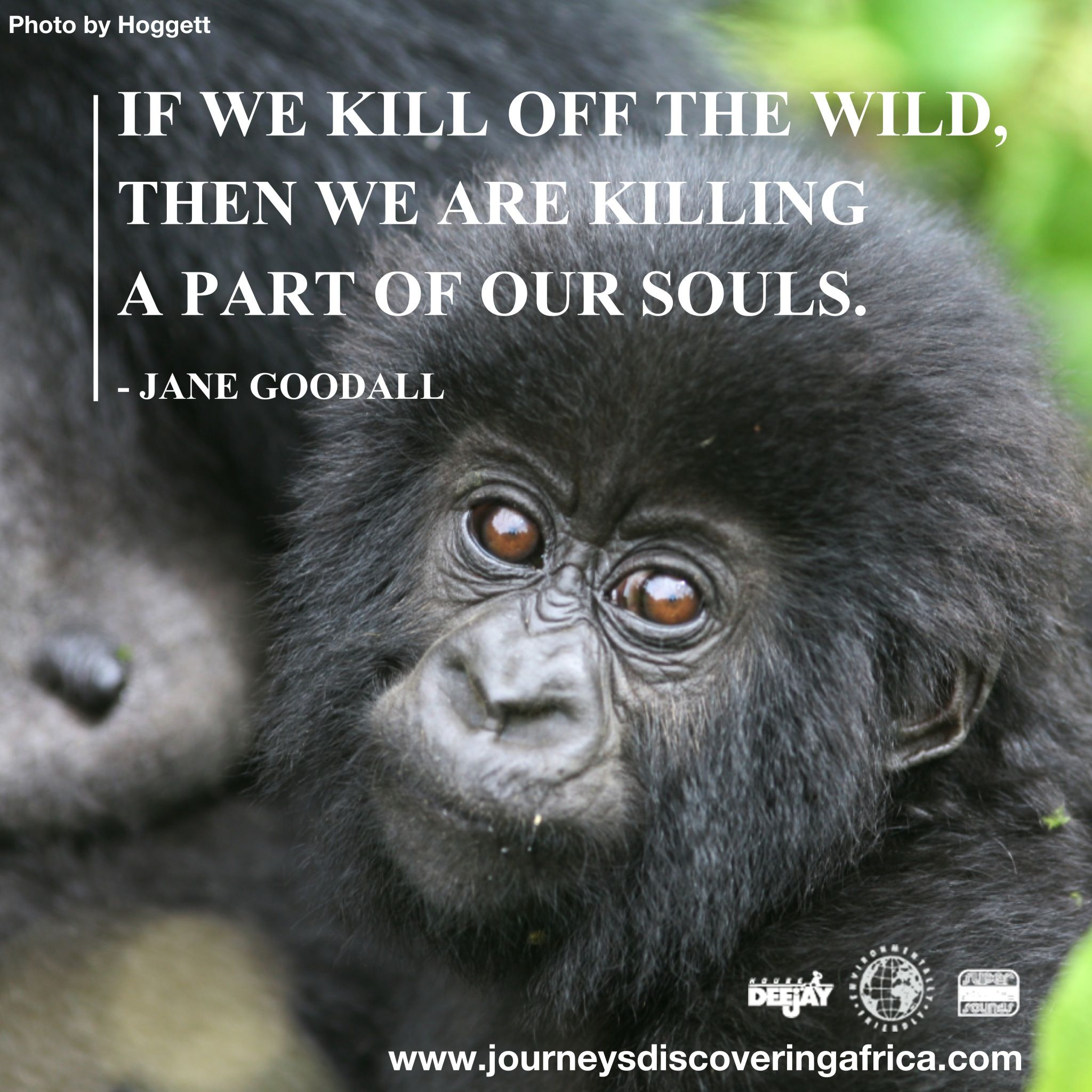 Wise words from the conservationist Jane Goodall. Photo