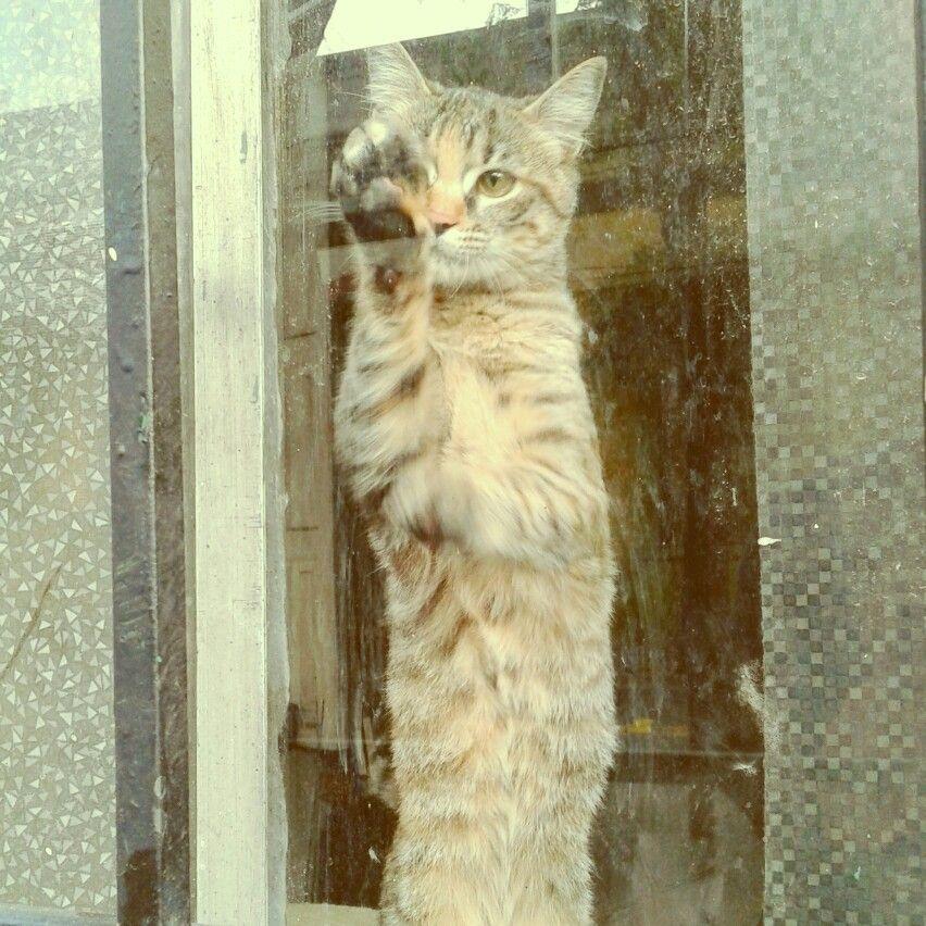Gato. Fotografía: Felipe Suárez