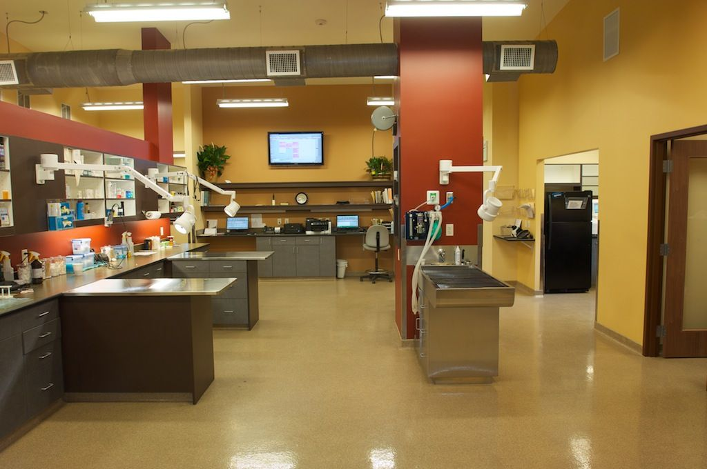 veterinary clinic design - Google Search | Design ideas ...