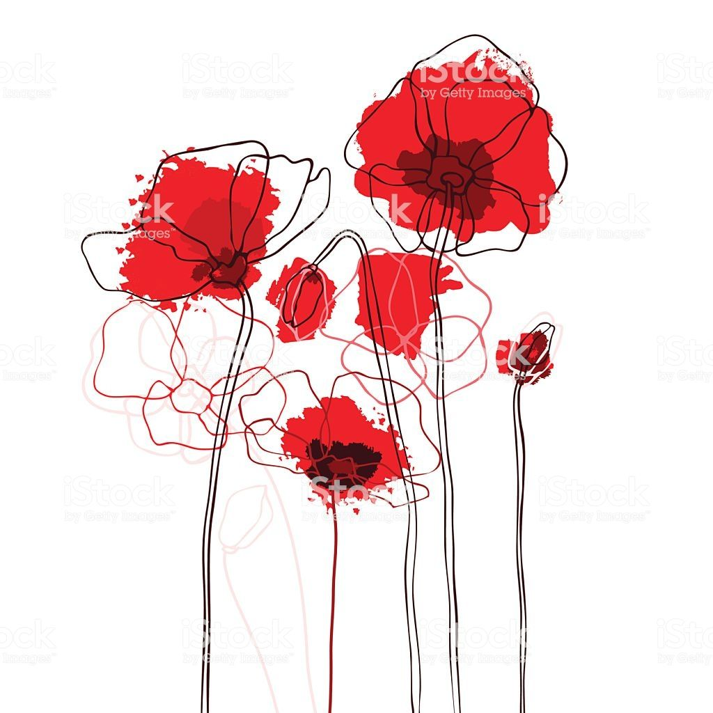 Red poppies on a white background. Vector illustration