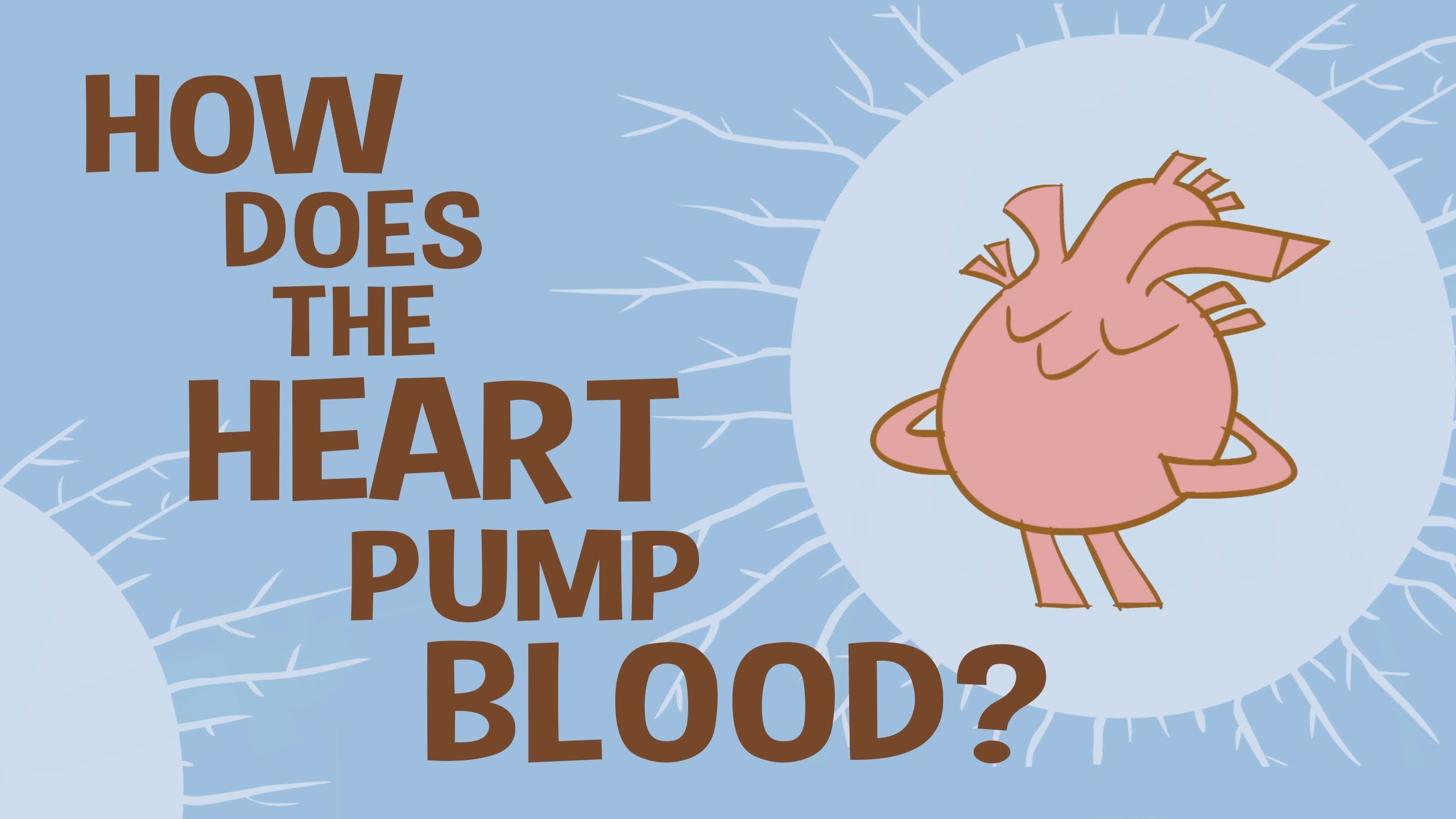 Ted Ed Animation Explains How The Human Heart Works