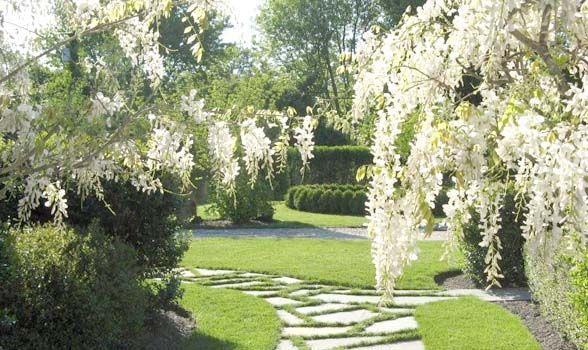 images of white gardens in the hamptons | Chinese White Wisteria. (Linda Ardigo)