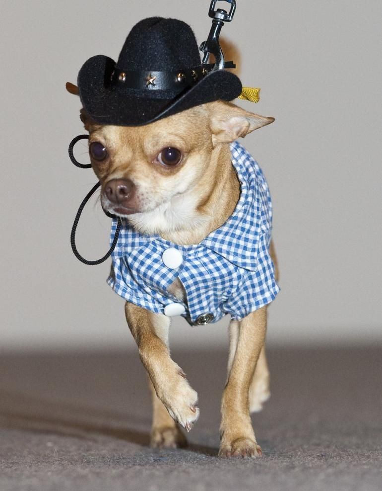 10 Animals Who Might Dress Better Than You Puppy Costume Funny
