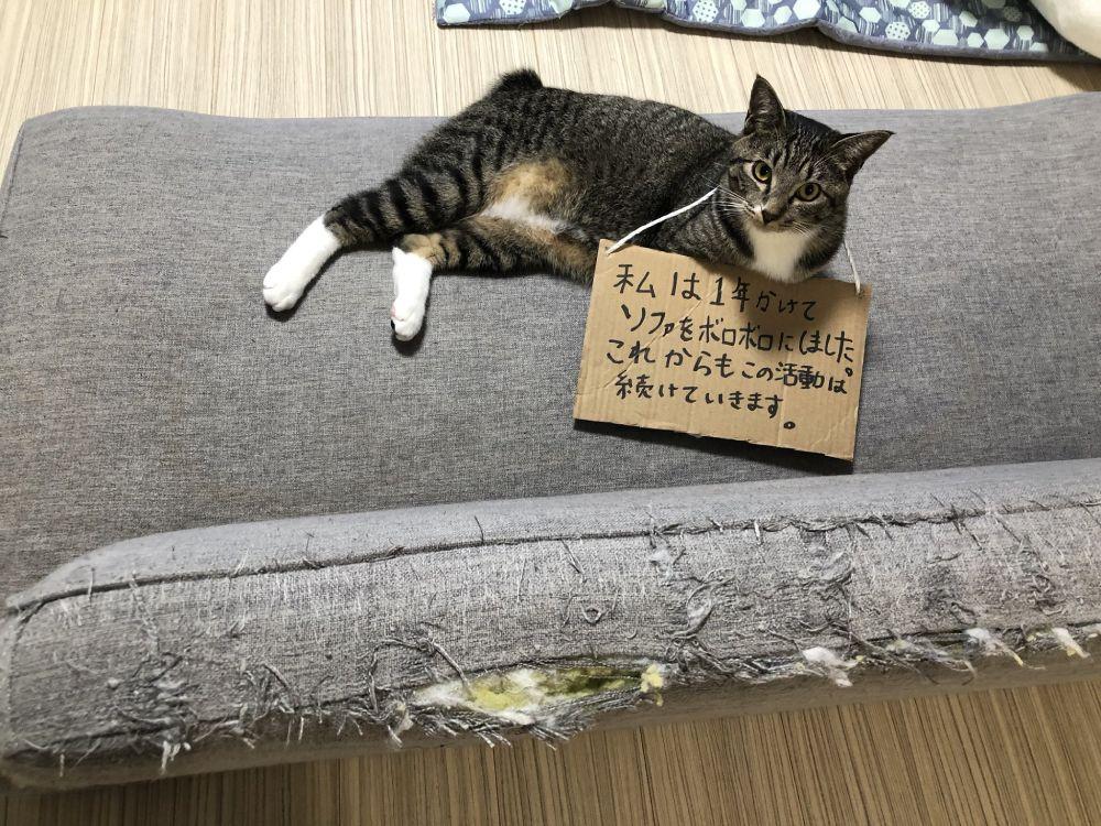 反省どころか開き直る猫 これからもこの活動は続けていきます Yahoo Japan 反省猫 動物ミーム 猫
