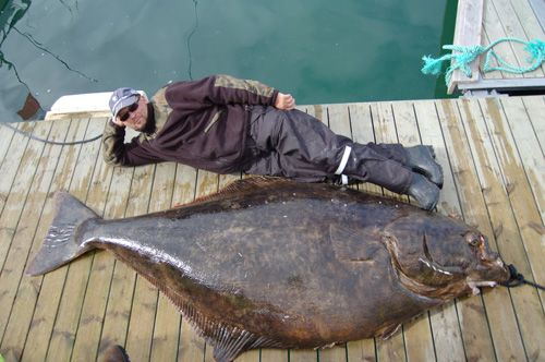 This Is What A 466 Pound Halibut Looks Like Fish Salmon Fishing Fishing Pictures