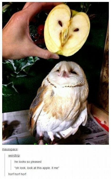 Owl Apple Clean Funny Cute Funny Animals Funny Animals Funny Animal Pictures
