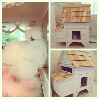 Customer Photos Silkies Pet Chickens Silkie Chickens Coop