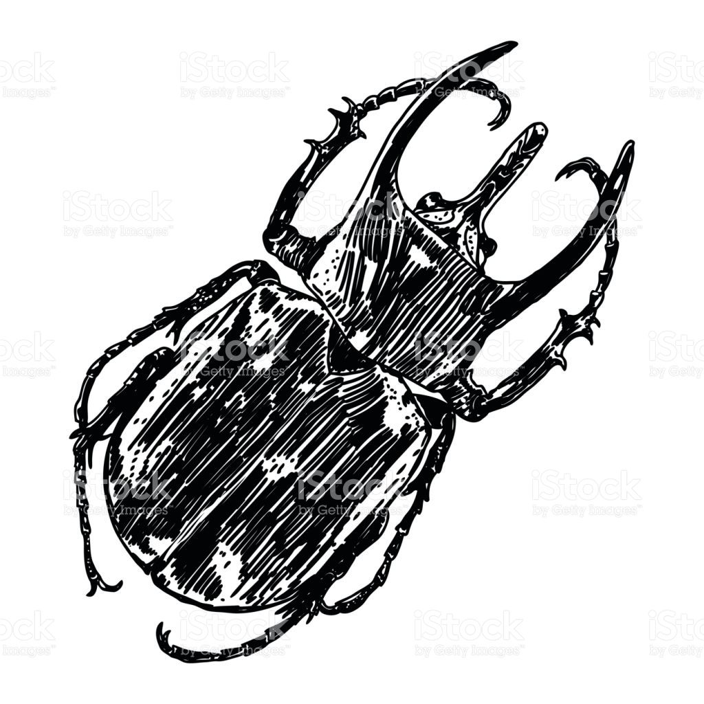image result for stag beetle stag beetle Ox Beetle image result for stag beetle
