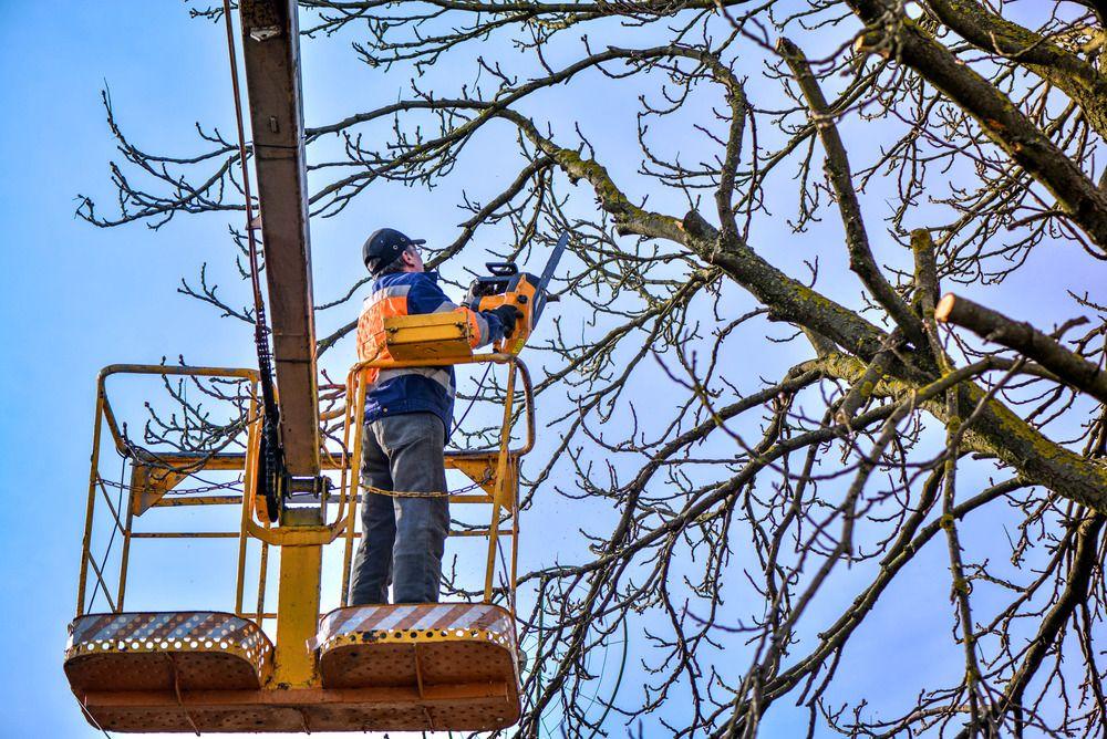 Hoa apartments los angeles tree services tree