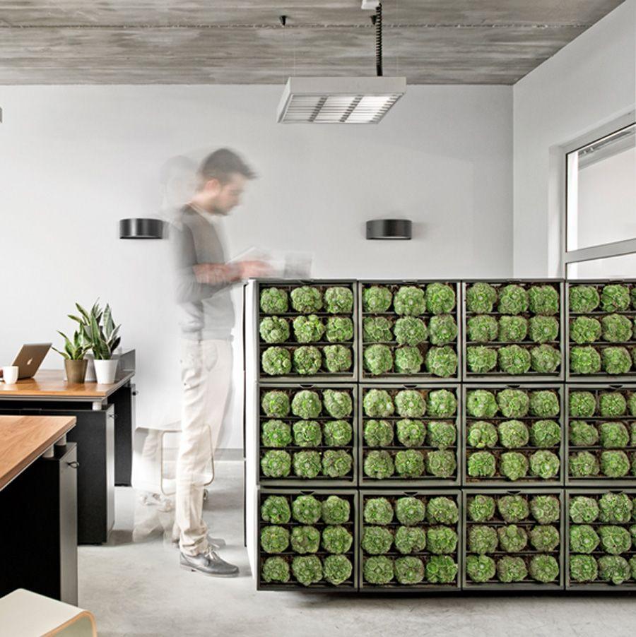 Wandgestaltung Büro karoo stylishe raumteiler und kreative wandgestaltung für das büro