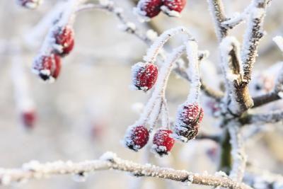 Cómo hacer nieve casera para decorar el árbol de Navidad | eHow en Español