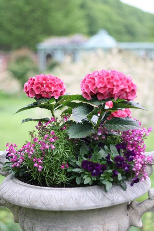 Container gardening  French-Kissed.com