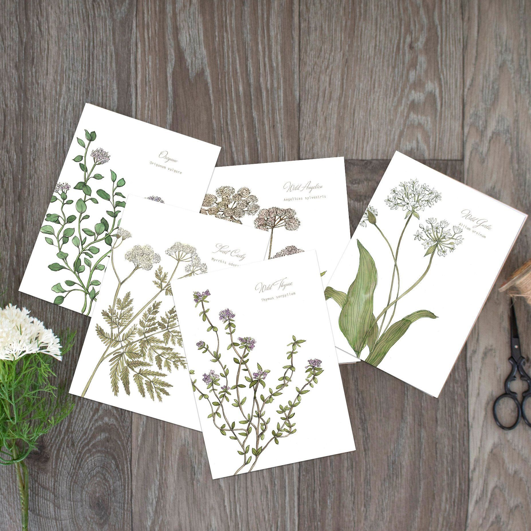 Scottish Wild Herbs Collection Of Botanical Watercolour Cards