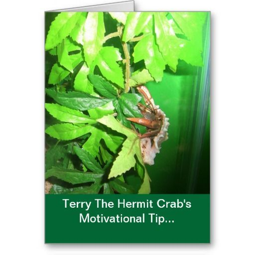 Review This!: One Hermit Crab Takes on the World with His Message of Hope; 'Stop Crabbin'