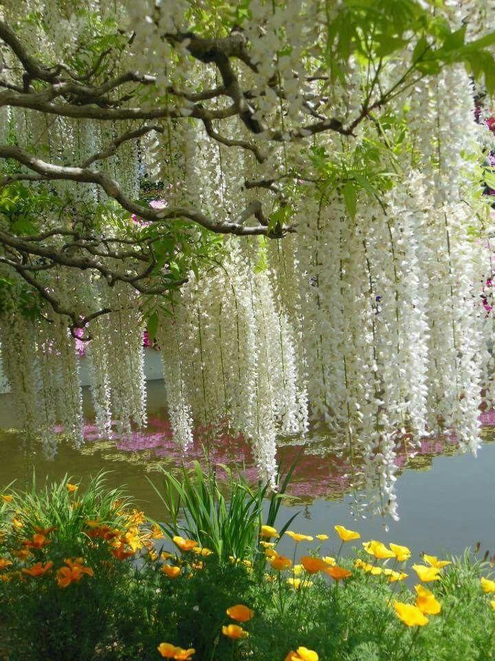 This Is Absolutely Beautiful Jardines Jardineria Plantas Jardin