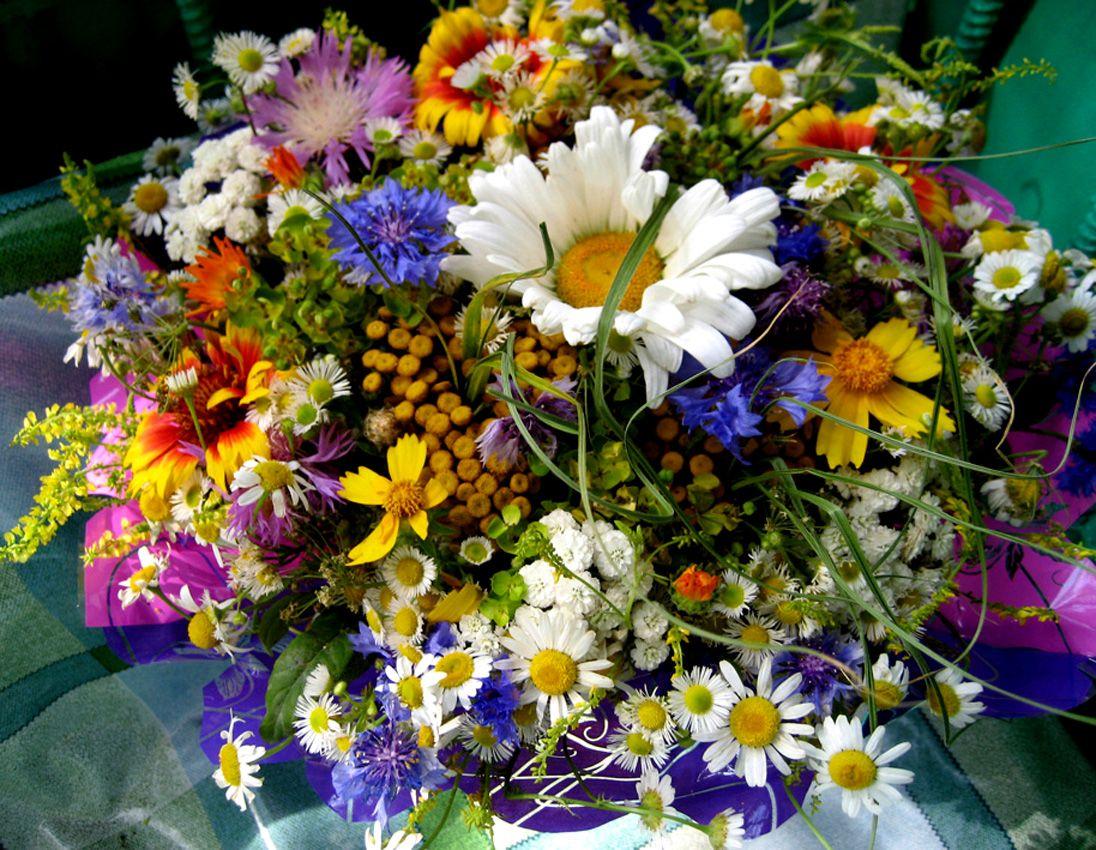 его мнению, с днем рождения картинки полевые цветы суд