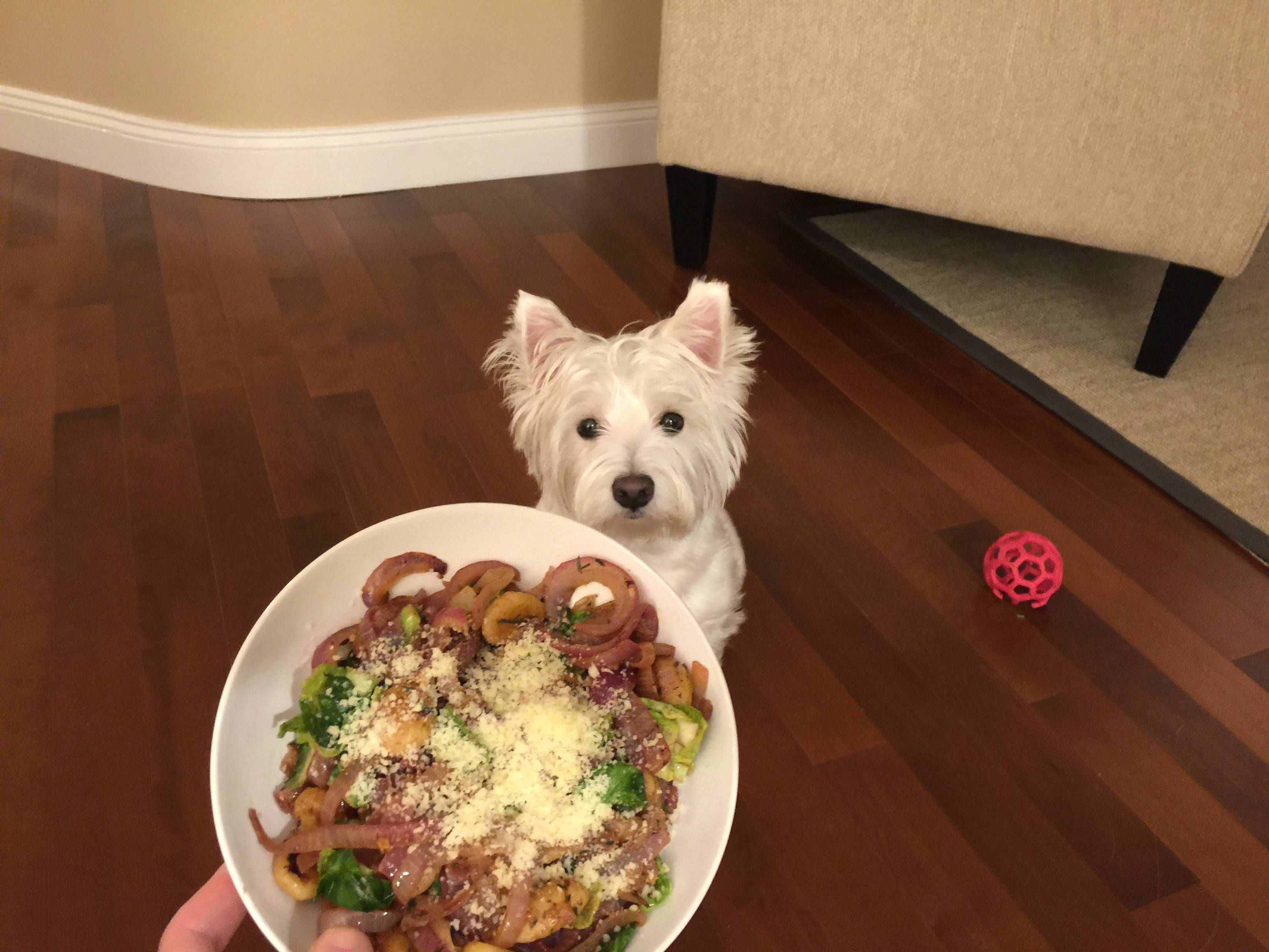 My partner is out of town and she requested updates. It appears as though I am actually trying to hurt her because I cook like this and my dog looks like that.