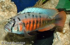 Pin On Fish And Aquarium Stuff I Like Want