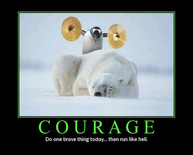 Courage Defined Funny Inspirational Quotes Penguins Funny Funny Animal Photos