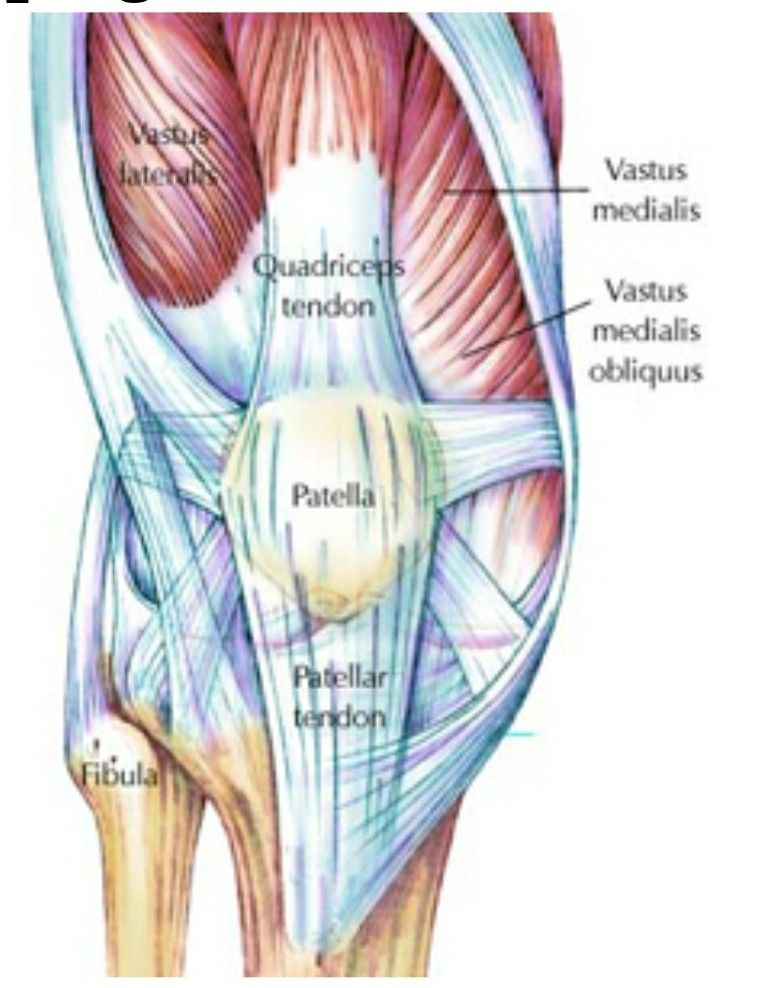 Knee Rebuild Muscles Tendons Ligaments Get Fit Or Die Trying