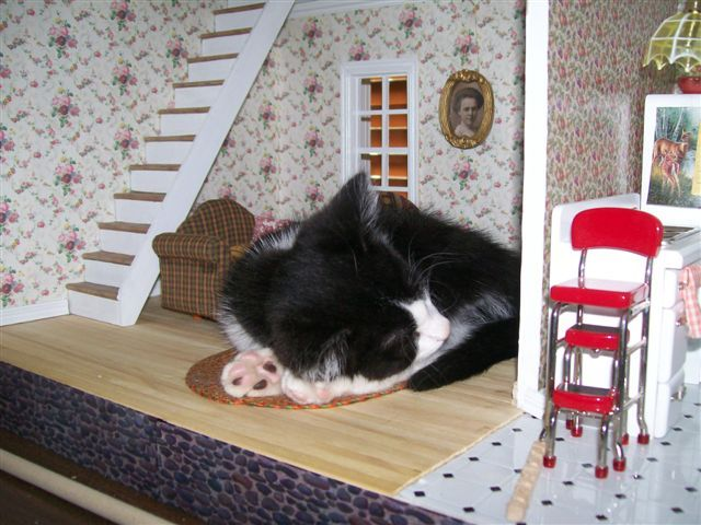 Rachel's mom's cat, having a nap in a dollhouse she is building