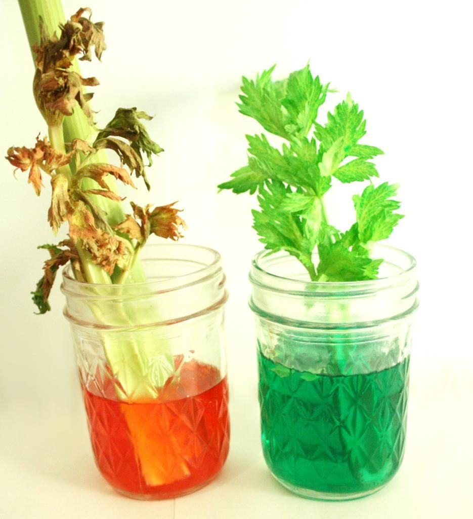 The Celery Experiment - Is artificial coloring good for us? | Crazy ...