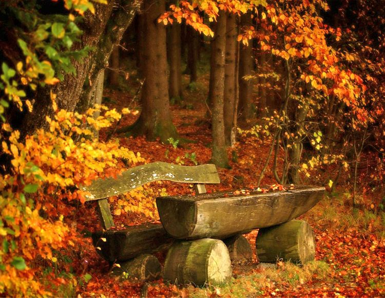 beautiful autumn deskt...