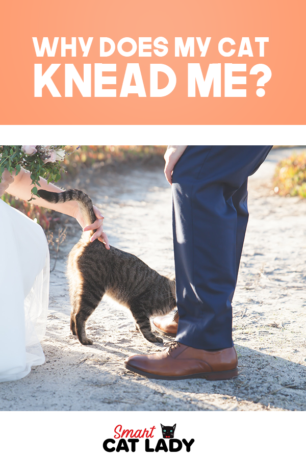Why Does My Cat Knead Me? Cats knead, Cats, Cat problems