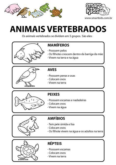 Colorir Desenho Animais Vertebrados Atividades Animais