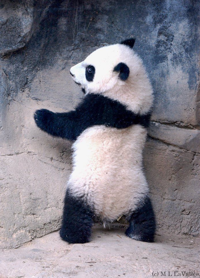 Mei Lun cuteness. #ZAFanFriday submission from Facebook user Lynne L.