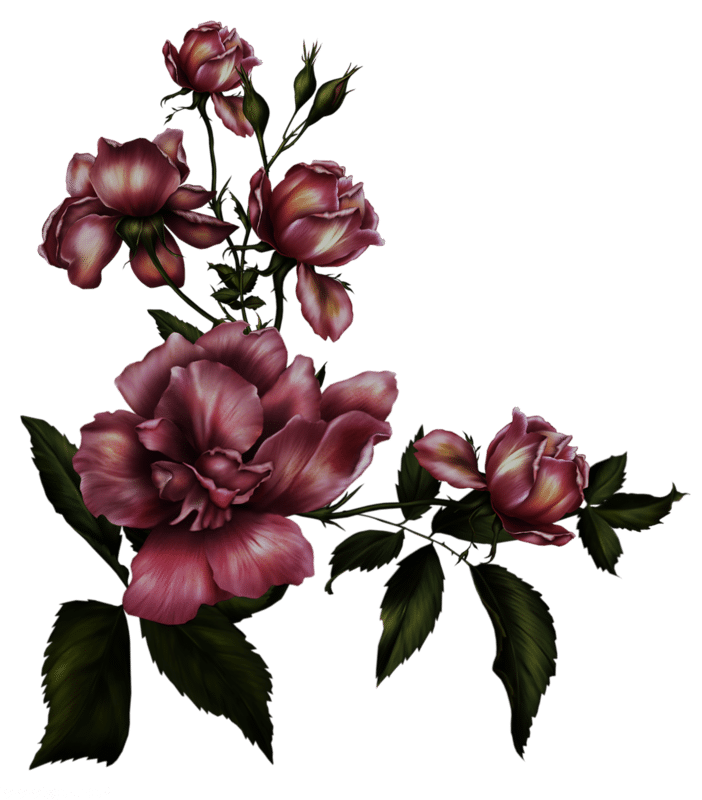 خلفيات ورد جميله ارق صور ورد 2018 Gothic Flowers Gothic Rose Flower Backgrounds