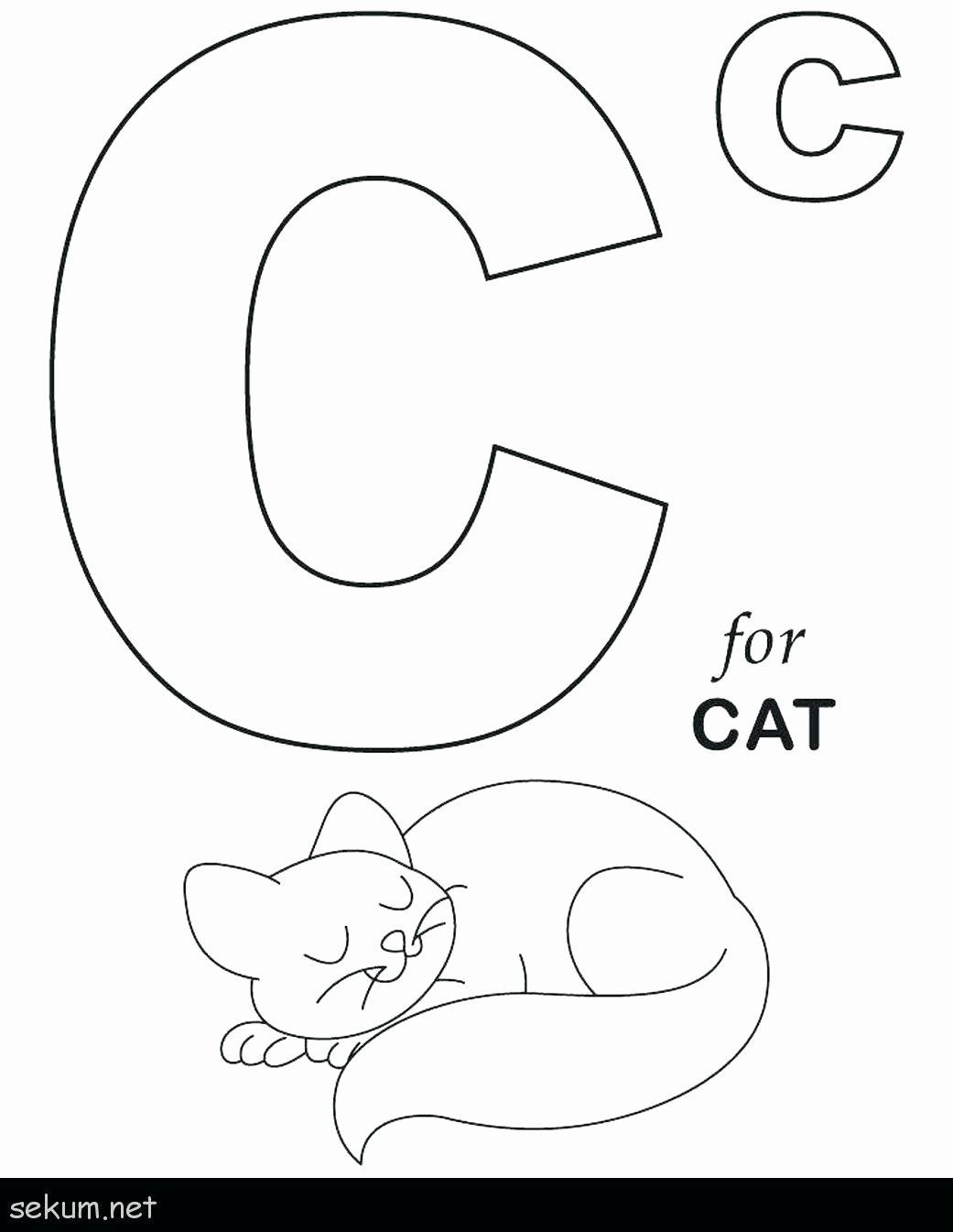 Alphabet Letters To Coloring Pages Di 2020 Dengan Gambar Buku