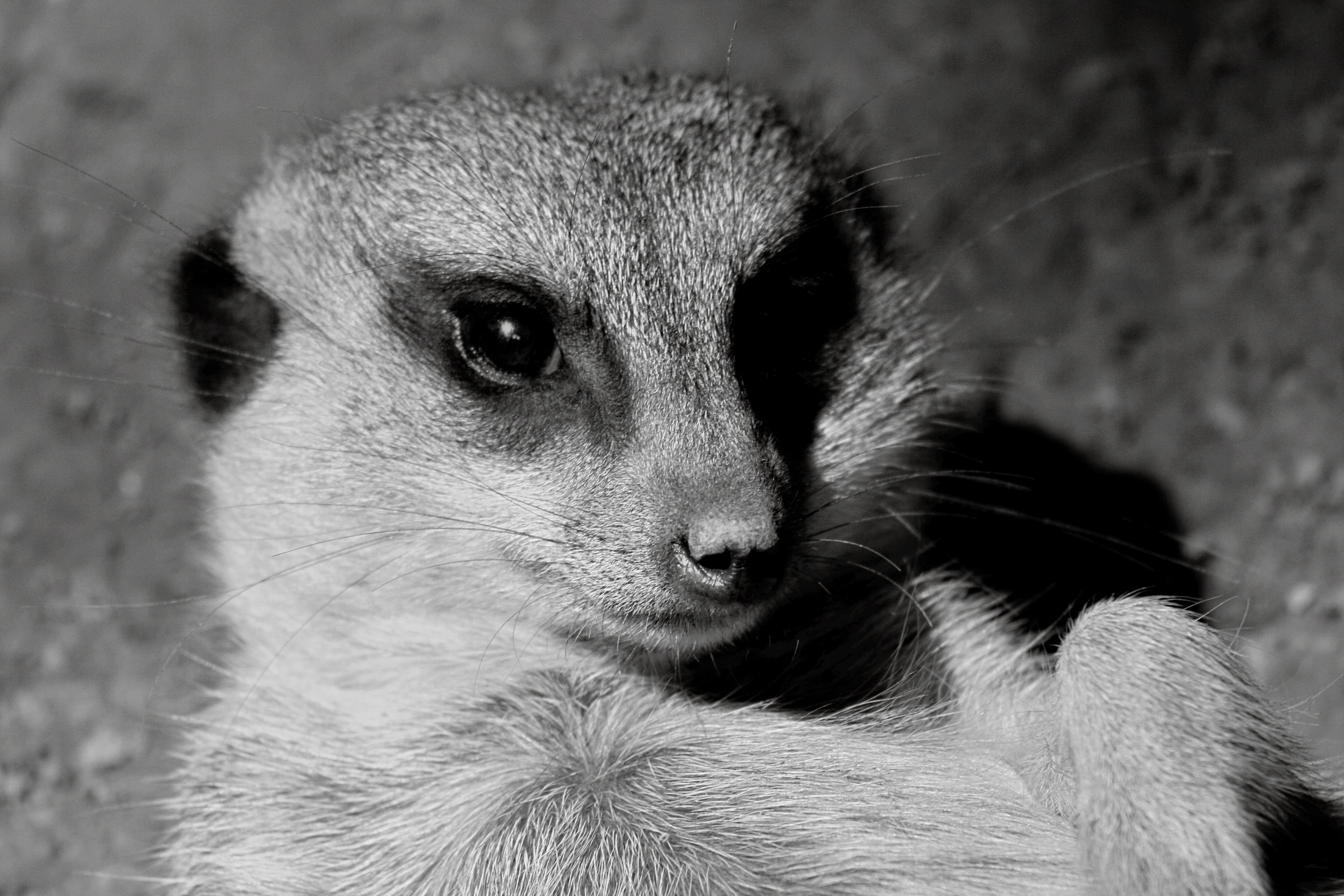 Grassmere zoo nashville tn by janis barnes zoo