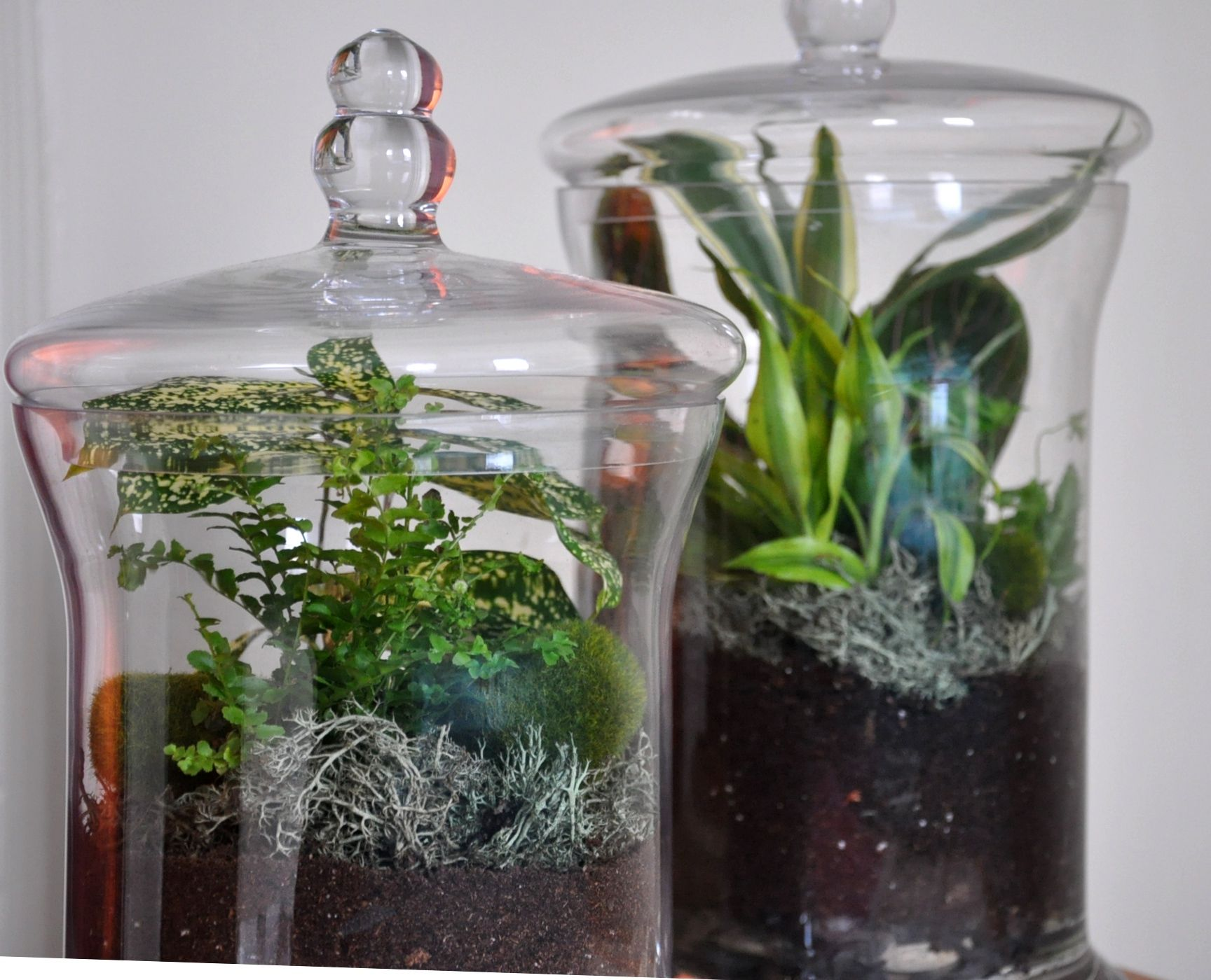 My Own Little Garden Within An Apothecary Jar
